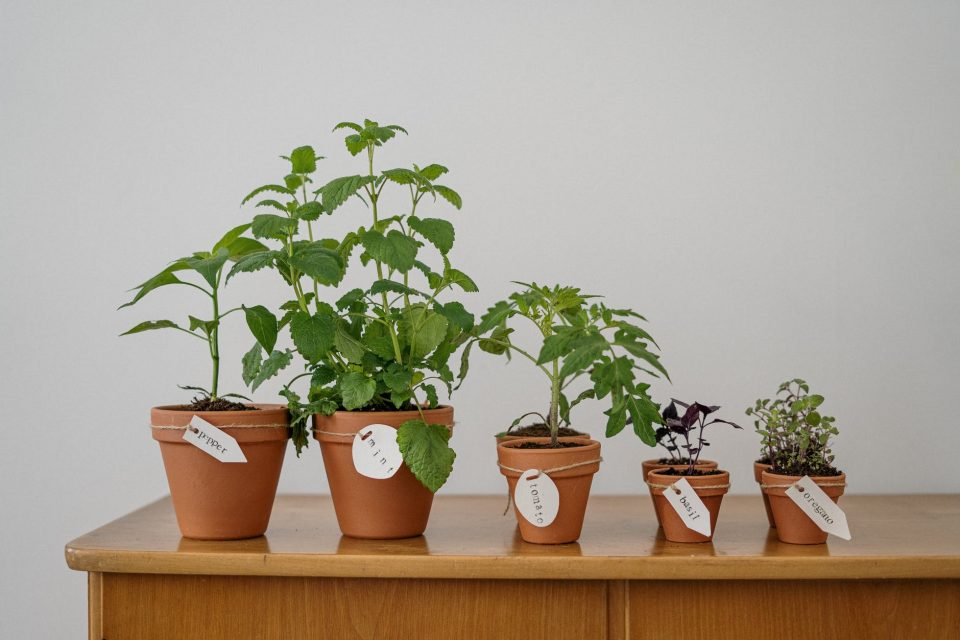 plants as a symbol of how to prepare your plants for a long-distance move